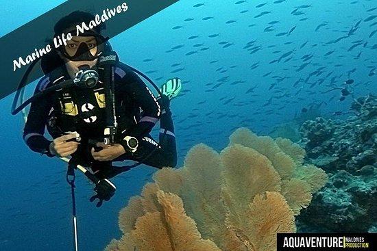 Forfait plongée pour plongeurs agréés...