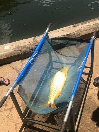 Pesqueiro Cantareira