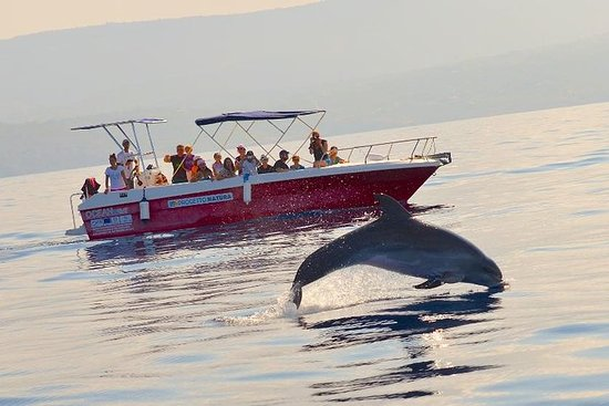 Summer Tour: Dolphin Watching e