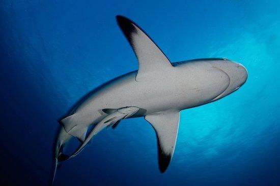 Immersione subacquea certificata Tahiti Fun