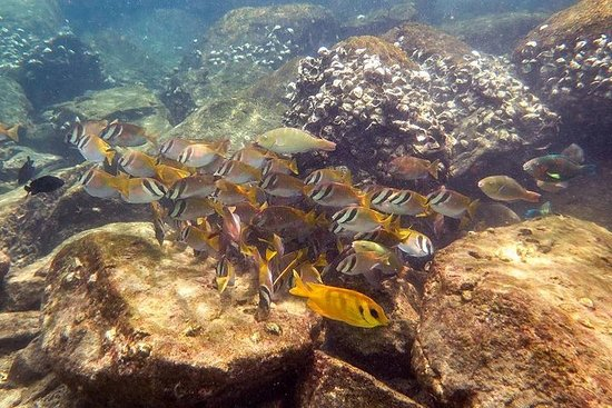 Discover Scuba Diving, try dive for beginners ( Start at Ko Kut)