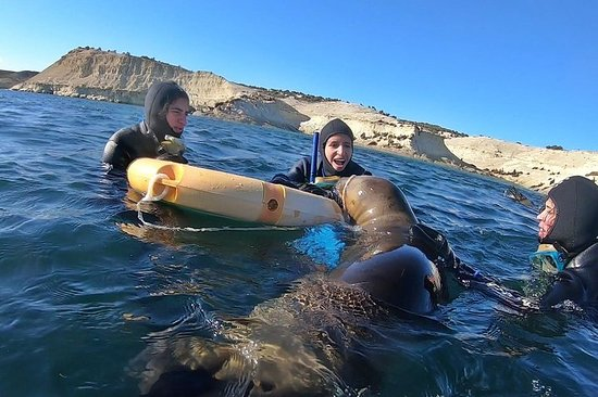 Snorkeling with Sea Lions by Madryn...