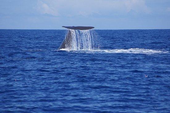 Walvissen kijken - Exclusiviteit