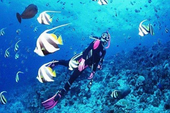 ニャチャン:美しいMun島とトップアクティビティーダイビングツアーでの冒険