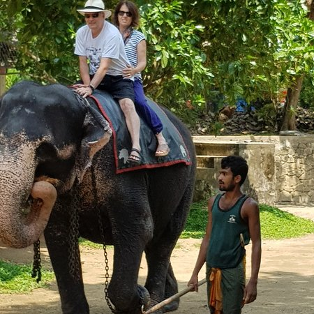 Pinnawela elephant