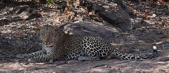 Heartwarming hospitability in the wild of Botswana