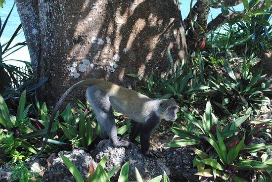 Scimmiette al villaggio