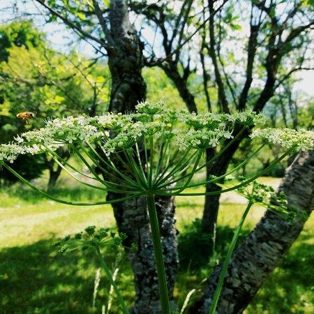 Natyre ne lepushe