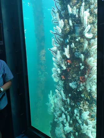 Busselton Jetty Train Ride and Underwater Observatory Tour Fotografie