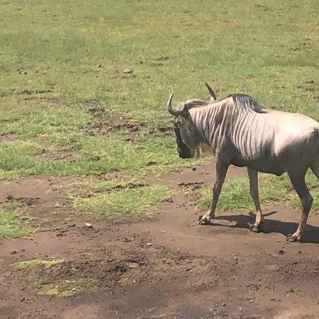Amboseli National Park, Kenya: Maasai warrior