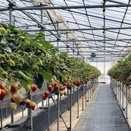 Kinta Farm Berryne