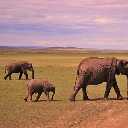 Amboseli national park , Kenya  Www savannaoutdoorsafaris.com.  +254703122432
