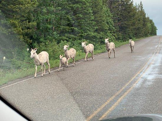 Moiese, Монтана: Bison Range National Park