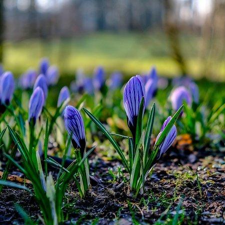 Fife, UK: Blooming Lovely.....🌱🌱🌱🌱