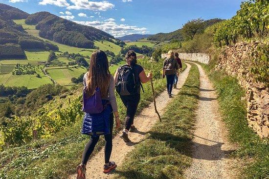 Caminata por el patrimonio mundial de Wachau