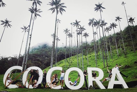 Short Tour Cocora Valley