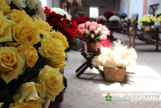Ecuadorian Roses Are Considered By Many To Be The Best And Most Beautiful Flowers In The World In Ecuador The Rose Is A Significant Part Of The Economy In The Country More