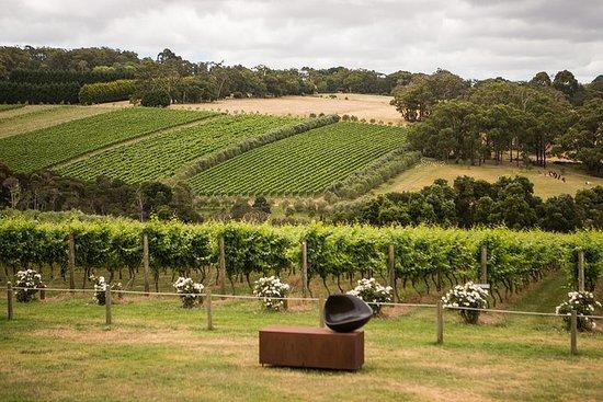 Montalto Vineyard: Mornington Peninsula Discovery Vinsmaking og lunsj