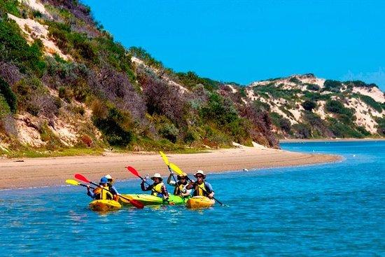 Tour di mezza giornata in kayak nel parco nazionale di Coorong