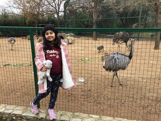 Skip the Line: Athens Attica Zoological Park General Admission Ticket: devekuşu