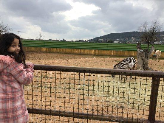 Skip the Line: Athens Attica Zoological Park General Admission Ticket: zebra