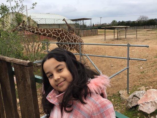 Skip the Line: Athens Attica Zoological Park General Admission Ticket: zürafa