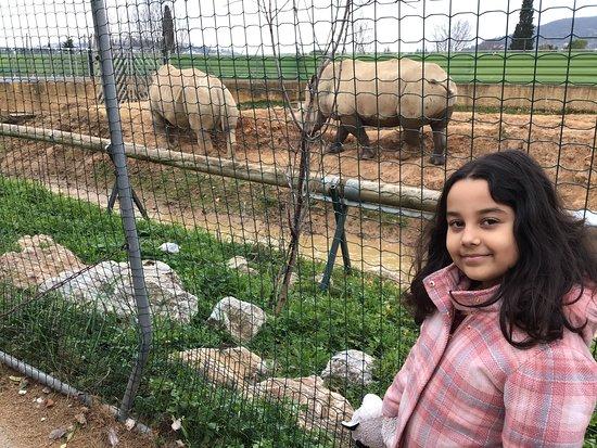 Skip the Line: Athens Attica Zoological Park General Admission Ticket: hipopotam