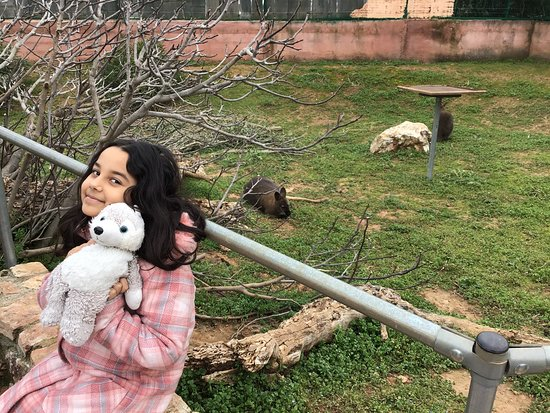 Skip the Line: Athens Attica Zoological Park General Admission Ticket: kanguru