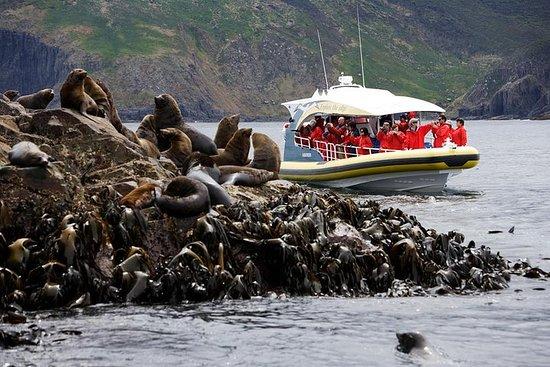 3-stündige Bruny Island Cruise von...