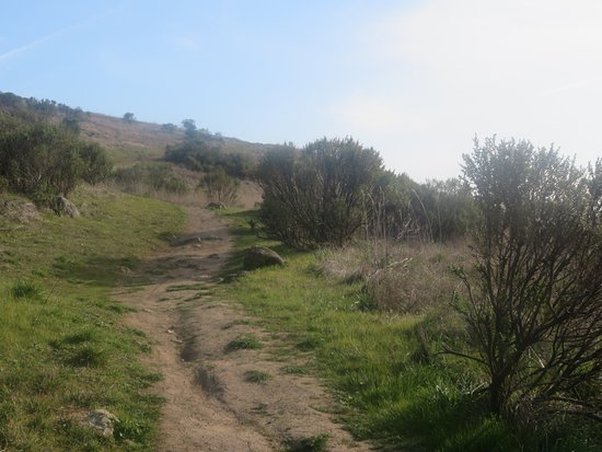 Russian Ridge Open Space Reserve