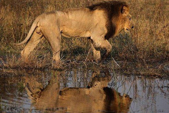 12 Days -Camping Safari; Vic Falls...