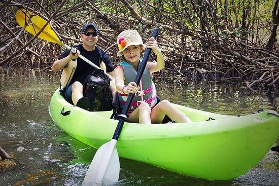 Manège de canoë-kayak et de dauphins...
