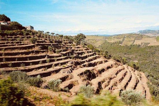 Porto: Excursão às vinícolas do Douro...