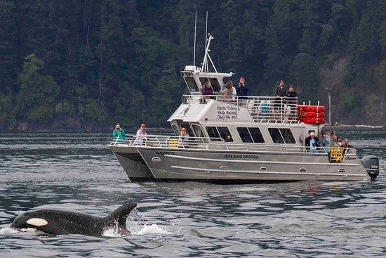 Avistamiento de ballenas anacortes