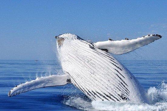 Whale Watching da Augusta in Australia occidentale