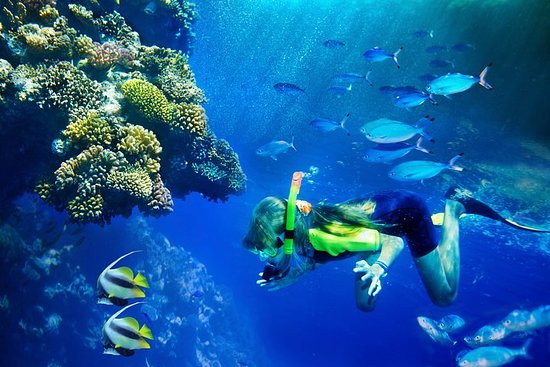 Lanai Snorkel and Dolphin Watch from Lahaina