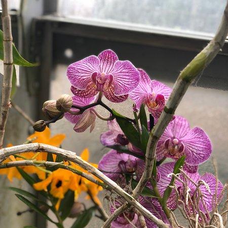 University of Oxford Botanic Garden - 2020 What to Know ...