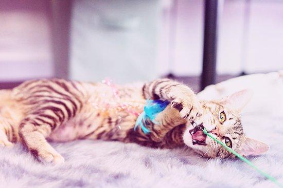 Brea, CA: Tigerlily | adopted May 2019