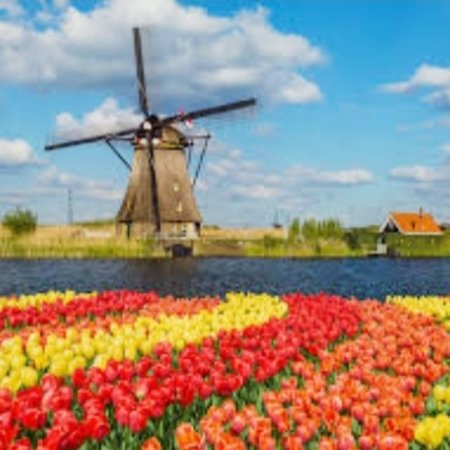 Noord-Holland, Nederland: Flowers for my followers