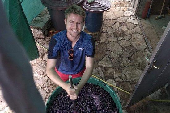 Dégustation de vin dans le vignoble...