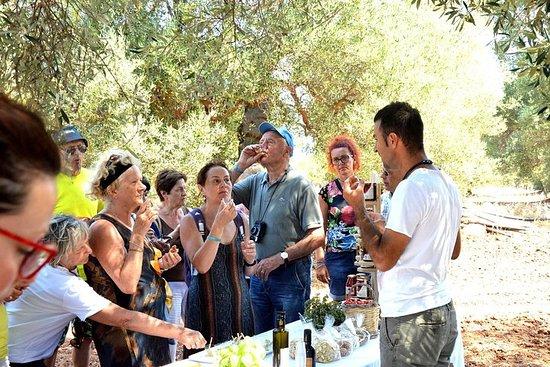 Marcher à l'ombre des oliviers centenaires de Torre Guaceto (Pouilles)