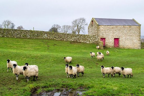 Full-Day, Small-Group Yorkshire Dales Tour from York