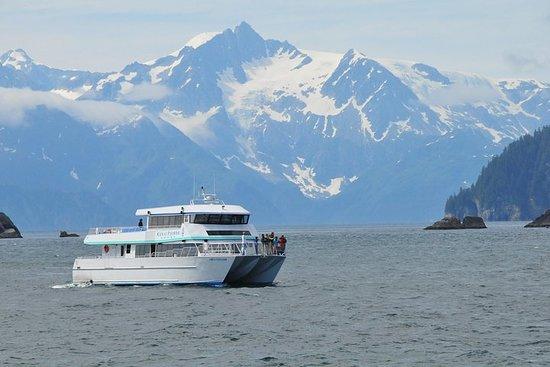 Escursione a bordo di una crociera di Seward: Northwestern Fjord