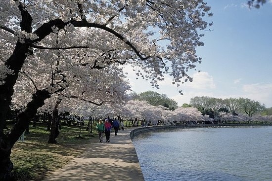 2-Day Cherry Blossom (D.C.) & Hershey's Chocolate World Tour from New...