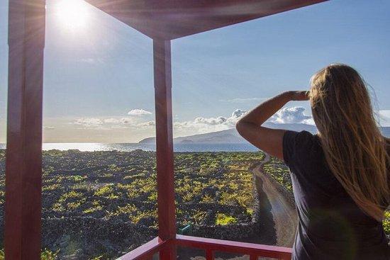 Wine Tour à Pico demi-journée