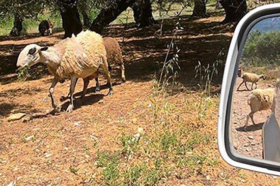 Jeep Safari Ojo del Pastor
