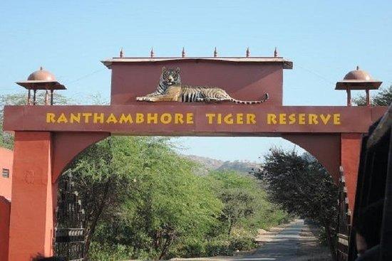 斋浦尔Ranthambore国家公园的吉普野生动物园体验