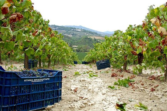 The Best Winery & Tasting Tour i Nemea...