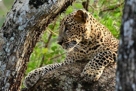 Tarde Safari en el Parque Nacional...
