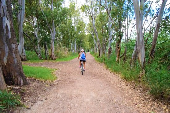 2 days by bike through beaches and natural parks of Valencia with...